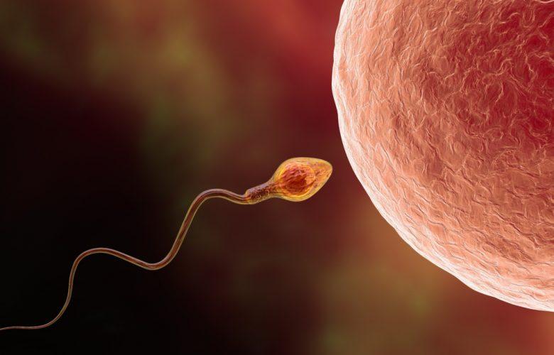 Complicaciones en la reproducción: causas y medidas preventivas | Océano Medicina