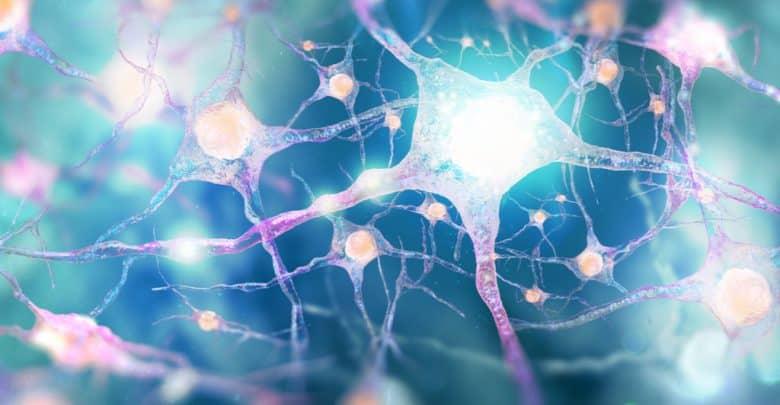 Nuevos datos sobre las formas de comunicación de las neuronas del reloj biológico | Océano Medicina