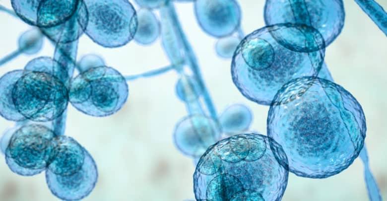 ¿Qué hacer si se identifica Candida auris en un establecimiento de salud?   Océano Medicina