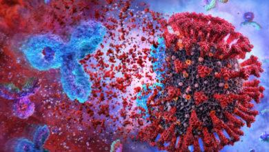 Tratamientos con anticuerpos demuestran ser efectivos en fases leves o moderadas de COVID-19   Océano Medicina