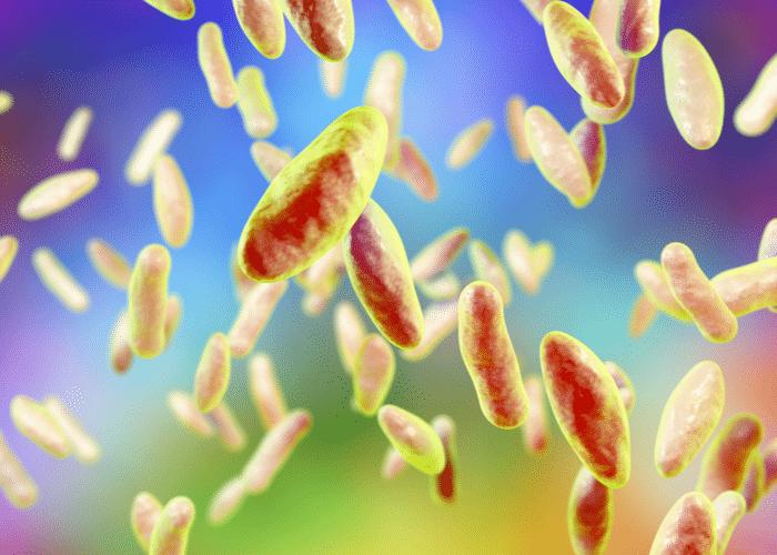 Descubren los genes que utiliza la bacteria Brucella para infectar a sus hospedadores | Océano Medicina